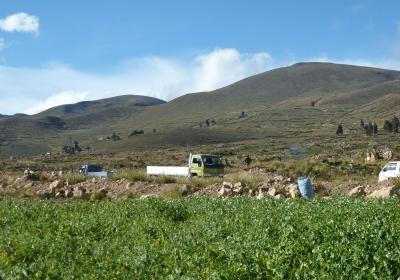 pea trade Bolivian Andes