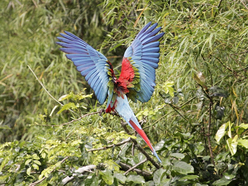 biodiversity in the tropical andes how it is being threatened why
